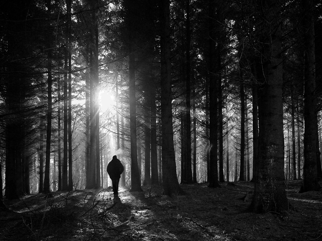 Silhouette of a man in the woods.