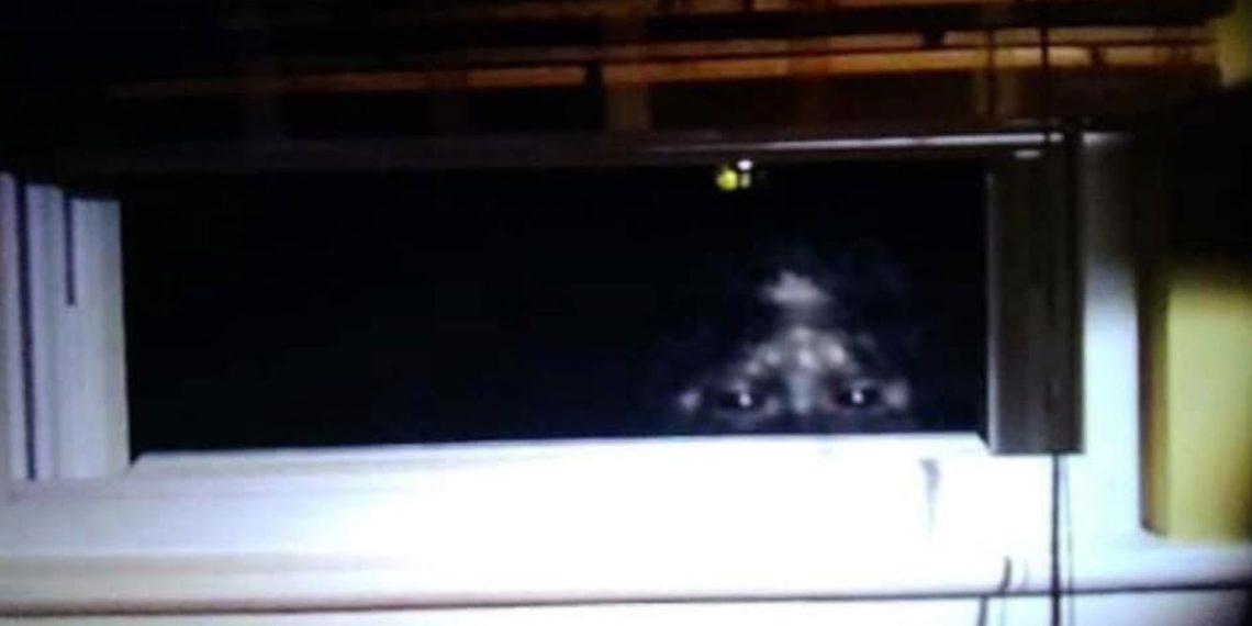 Scott Yeoman Bigfoot photo.